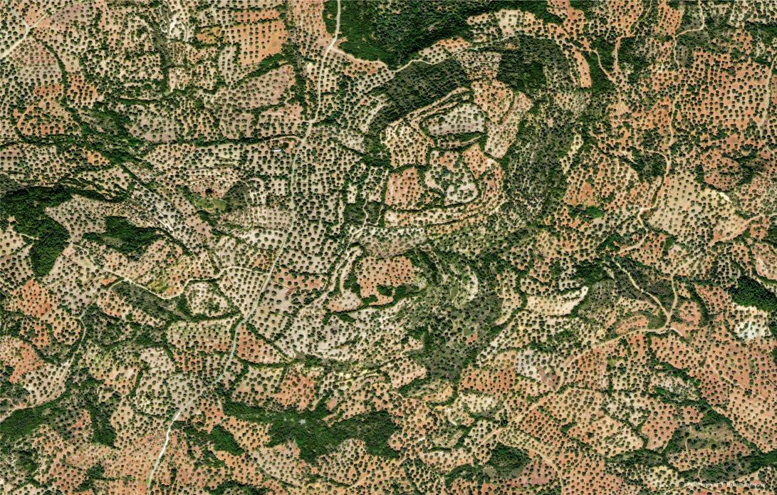 A high-resolution satellite view of olive groves on the island of Lesbos in Greece 39°10′N 26°20′E satellite image ©2019 Maxar Technologies